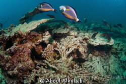 It was just another dive. by Abdul Alkulaib